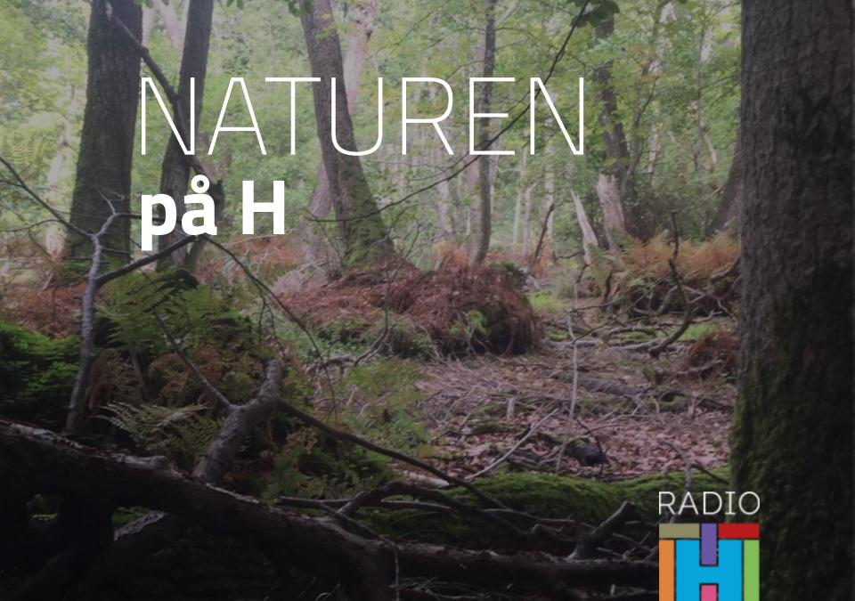 Naturen på H – Fuglefolket